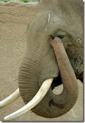 elephanttrunk